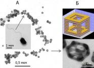 Выявление углеводного чехла на поверхности полярного жгутика азоспириллы с использованием антител, конъюгированных с нанокейджами (А), схема и фотография нанокейджа, полученная на электронном микроскопе Libra-120 в ИБФРМ РАН (Б)