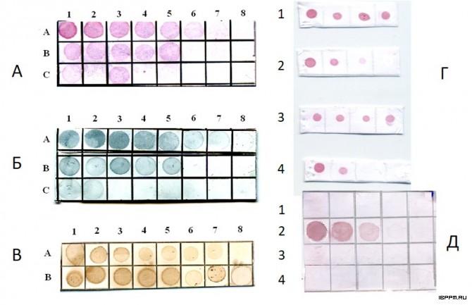 Дот-иммуноанализ ферритина в сыворотках крови животных (А-В) и бактериофагов из Azospirillum (Г, Д) с мини-Ат из фаговой библиотеки с применением в качестве меток конъюгатов КЗ 15-нм (А), золотых нанооболочек (Б) и пероксидазы хрена (В), после 3-го раунда селекции (Г), с оценкой их специфичности к исследуемому бактериофагу ΦAl-Sp59b (Д 2) в сравнении с другими бактериофагами (Д 1, 3, 4)