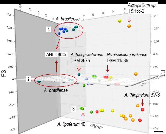 Кластеризация геномов Azospirillum методом PCoA по результатам применения теста ANI к их набору от августа 2018 г.