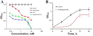 Рост Achromobacter insolitus LCu2 на среде с загрязнениями (А), на глифосате в качестве единственного источника фосфора (В)